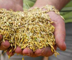 crop_variety