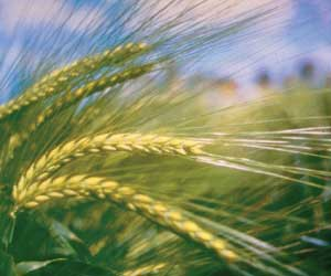 new_crop